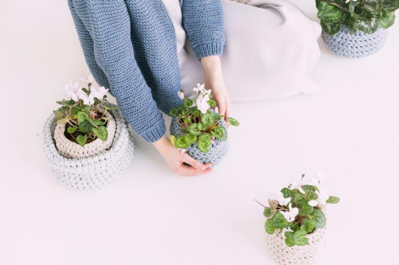 Комнатные растения: осознанный выбор и правильный уход